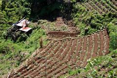 Arable farming in Madeira (robin denton) Tags: madeira portugal farming agriculture arable island landscape