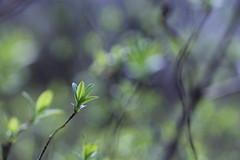 (@5imonapol) Tags: wood forest bosco april aprile leaves foglie trees alberi bokeh light sole sun