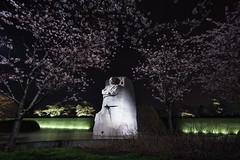 MLK And Night Blossoms. Washington, D.C. (April 3, 2018) (Thomas Cluderay) Tags: photography canon canon6d dc washingtondc washington washingtonian district capital mlk mlk50 mlkjr mlkjrmemorial nps nightphotography cherryblossom cherryblossoms memorial interior mlk50forward