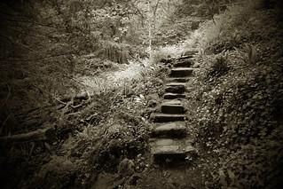 365 Steps
