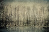 On the river bank (vittorio.chiampan) Tags: river trees winter fineart art moody landscape