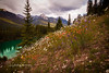 Bow Valley Wildflowers (HikingJoe-Gone too long) Tags: bowriver bowvalley bowvalleyparkway canada canadianrockies daisies flowers indianpaintbrush landscape massiverange wildflowers