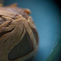 Muskatnuss (Jutta Vollmer) Tags: macro dof condiment macromondays