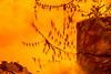20180413-032 (sulamith.sallmann) Tags: pflanzen analogeffekt analogfilter ast berlin blur botanik deutschland effect effects effekt filter folie folientechnik germany mitte orange pflanze plants unscharf verschwommen wedding zweig sulamithsallmann