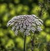 Flor (ibzsierra) Tags: ibiza eivissa baleares canon 7d tamron 150600 g2 flor fleur flwer salinas parque natural