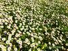 IMG_6457-2.jpg (Airbeluga) Tags: ccvm españa flores golf madrid naturaleza nature primavera comunidaddemadrid es