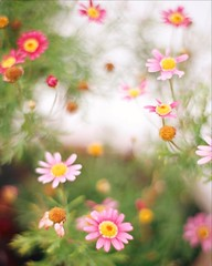 Have a great weekend! (ninasclicks) Tags: flowers littleflowers pink dof bokeh spring cheery