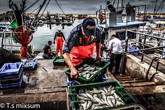 Fisherman's Wharf Jaffa Port (tchia sheffer) Tags: fisherman fishing travel fishermansboat fishermanswharf fish