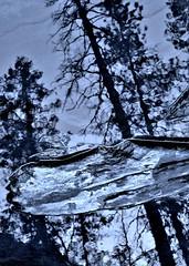 Sedona, AZ (lckoch61) Tags: water reflection tree blackandwhite monchrome