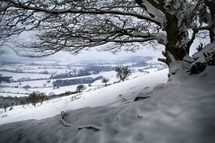 Bagborough hillside (OutdoorMonkey) Tags: quantocks quantockhills somerset hill snow tree scenic scenery outside outdoor countryside rural nature ice weather aonb westsomerset