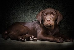 Liam (JACRIS08) Tags: dog perro mascota