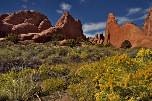Fins of Sandstone and Yellows of Flowers (Arches National Park)