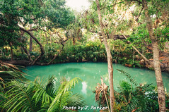 Green Spring (J. Parker Natural Florida Photographer) Tags: centralflorida deltona florida greenspring volusiacounty forest jungle outdoor park spring tropical woods wideangle vsco vscofilm color colorful water sulfur sulphur geology greenspringspark nature naturalbeauty ethereal