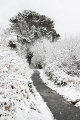 Argal Winter Wonderland (Andrew Hocking Photography) Tags: argal dam lake reservoir naturereserve winter snow wonderland trees path white whiteout cornwall penryn falmouth mabe 2018 snowy blizzard