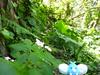 Swablu in Port of Keelung, Keelung 16 (Kasadera) Tags: チルット 青綿鳥 파비코 swablu wablu tylton keelung 基隆 ポケモン 神奇寶貝 寵物小精靈 pokémon ポケモンキッズ pokemonkids pokemon toys figure portofkeelung 基隆港