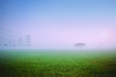 Foggy morning (Suresh V Raja) Tags: foggy morning sunrise dawn village agriculture farm field trees nikon suresh chennai tamilnadu india sureshcprog sureshphotography d5300 landscape sky fog