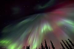 Crown of the Gods (Katy on the Tundra) Tags: corona northernlights auroraborealis bigdipper nightsky groserbär polarlichter