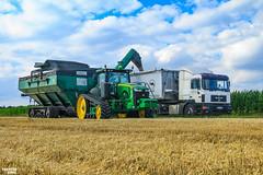 Unoading | JOHN DEERE // ELMER'S // MAN // WIELTON (martin_king.photo) Tags: cornharvest2016 corn harvest 2016 john deere johndeere johndeeres690i tracks johndeere616c16rowcornheaders jd616c johndeere8370rt elmer'smanufacturing 1600bushelhaulmaster elmes manufacturing haulmaster graincart grain cart ctf controlledtrafficfarming beltconveyor field season havest2016 martin king photo agriculture machinery machines tschechische republik weather powerfull martinkingphoto green mais maize huge big strong machine modernagriculture agricultural blue fields colorful work working summer greatdayschlepper landtechnik landwirt landwirtschaft runner speed panning rolling rollingshot shooting photographer photography sky clouds yellow man mantruck