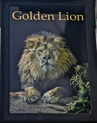 Golden Lion - Middlewich, Cheshire. (garstonian11) Tags: pubs cheshire pubsigns realale middlewich greenhalls