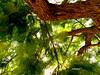 Uma árvore (ashera08) Tags: ashera sedrul árvores arte olhares portugal photos paintings picasa picture amizades friends flickr