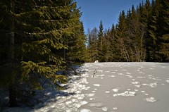 Harespor (KvikneFoto) Tags: natur norge hedmark landskap vinter winter snø snow tamron nikon
