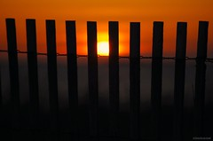 Don't fence me in.... (Joe Hengel) Tags: dontfencemein fence fenceline sandfence lowerslowerdelaware lsd lewes lewesde delaware de rooseveltinlet watchingthesunrise sunrise sun sunlight silhouette silhouettes morning morninglight horizon