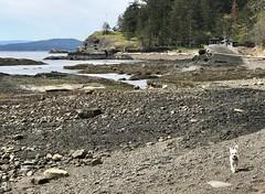 Pender Island (Ian Threlkeld) Tags: penderisland southerngulfislands britishcolumbia beautifulbc explore