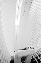 Tuesday in New York_13 (Rick Brandt) Tags: nikkor28mm oculus newyork d76 worldtradecenter nikonfm2 film trix unitedstates us