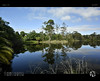 Reflections of Serenity XVI (tomraven) Tags: reflections lake trees forest tree ferntree tomraven water mirror pond aravenimage q22018 nikon1 v3 newzealand green blue greenblue