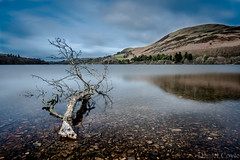 Loweswater Tree (Daniel Coyle) Tags: loweswatertree loweswater lake lakedistrict cumbria water reflections tree hill longexposure danielcoyle nikon nikond7100 d7100 uk england wideangle ndfilter ndgrad countryside branch
