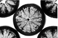 black and white blood oranges (auntneecey) Tags: blackandwhite macro bloodoranges citrus lightbox 365the2018edition 3652018 day105365 15apr18
