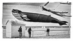 Moby-Dick (Des.Nam) Tags: nb noiretblanc nordpasdecalais bw blackwhite monochrome mono plage berck desnam fuji fujinon fujifilmxpro1 35mmf14 baleine cachalot cerfsvolants personnes people sable street streetphotographie xprostreet 169 sand bluewhale hautsdefrance beach kites cabinedeplage cabane poulpe calamar