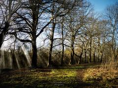 Shine Through the Trees