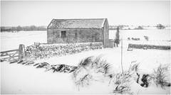 Stainton . (wayman2011) Tags: lightroomfujifilmx100 wayman2011 bwlandscapes mono rural oldbarns winter snow pennines dales teesdale stainton countydurham uk