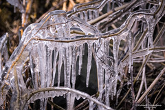 2018-03 Echt ijskoud met aanvriezende oevers bij Stad aan 't Haringvliet/NL (Meteo Hellevoetsluis) Tags: 0318 2018 aboutpixels almanak goereeoverflakkee haringvliet holland lenteseizoen mnd03 nikond7200 nl nederland netherlands nikon springseason stadaantharingvliet zuidholland begroeiing binnenwater border collecties eau forecast freezing freezingcold freshwater frost geografie geography ice ijs landscape landschap maart march meteo meteorologie meteorology nature natuur oever reed riet temperature temperatuur vegetation vorst vrieskou water weather weer weerbericht specials almanak20180318