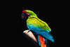 Perroquet (PhotOw'graphie) Tags: oiseau zoo amiens perroquet couleur découpe montage aras nature