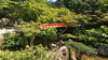 ... The Sacred island of Miyajima  ... (geolis06) Tags: geolis06 asia asie japan japon 日本 2017 itsukushima miyajima patrimoinemondial unesco unescoworldheritage unescosite isle torii cerf île deer shintoïsme shintoism sacré sacred bouddhisme buddhism religion olympus olympuspenf bridge pont