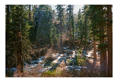 Beaming Through (iElectronCloud) Tags: wood woods tree trees snow big bear hike nature outdoor outdoors rock rocks boulders cold winter forest