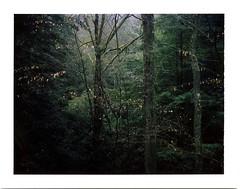 (babireley) Tags: polaroid250 fujifilmfp100c pottercountypa pottercounty pa pawilds susquehannockstateforest