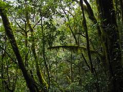 La Gomera Wandern (stefan.selle) Tags: la gomera wandern jardin de las creces raso bruma