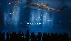 DSC_1996 (hhardawaytwhhardawaytw) Tags: d750 sigma nikon 35mm portrait kid f14 okinawa 沖繩 family 沖縄美ら海水族館 黑潮之海 whale shark whaleshark sea child 鯨鯊 love