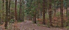 Heerlijkheid 'De Eese' (henkmulder887) Tags: landgoeddeeese heerlijkheiddeeese steenwijk kopvanoverijssel overijssel landgoed bos bomenlaan vankarnebeek holland thenetherlands natuur natur nature natura wandelen law friesewoudenpad