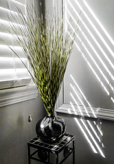 Simplicity I (michaelwalker19) Tags: vase ornamentalgrass selectivecolor shadows stilllife blinds green