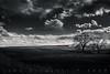 Vast Open Country (Colorado & Southern) Tags: bnsfrailway bnsf bnsfes44c4 gees44c4 gec449w ballast ballasttrain trains train railfanning railroad railfan railway railroads railroading rail rr railroadtrack fortcollinscolorado colorado coloradorailroads coloradotrains landscape trees
