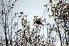 Back Yard_2018_04_07_(12) (Juergen__S) Tags: yard backyard nature flower closeup belgium mons tree bird
