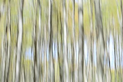 Longing (Note-ables by Lynn) Tags: blur icm trees spring