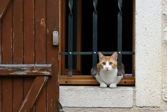 Les jolies rencontres (Nadia (no awards please !)) Tags: chat cat animal pet fenêtre window rencontre