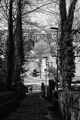 Rochdale (Missy Jussy) Tags: rochdale trees view ivy steps people cars buildings sunlight shadows light town streetlamp streets roads mono monochrome blackwhite blackandwhite bw canon 5d canon5dmarkll canon5d canoneos5dmarkii 50mm ef50mmf18ll canon50mm fantastic50mm primelens fixedfocallength