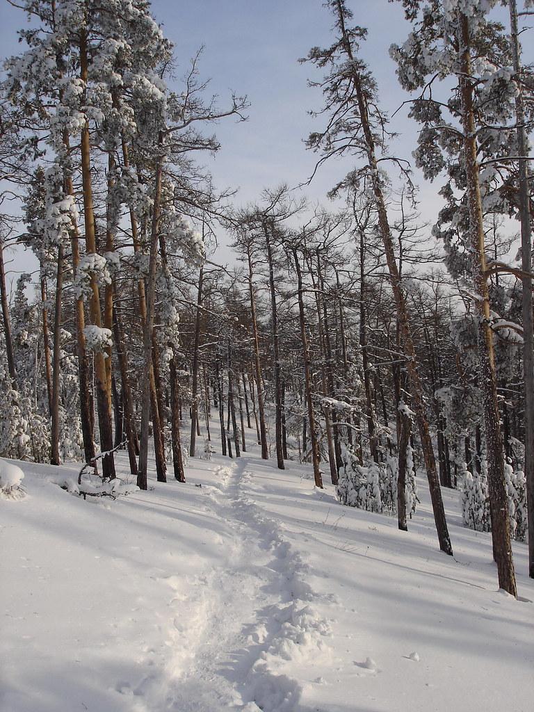 фото: Тропа в снегу
