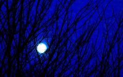 100% Lune (Jean-Pierre Bérubé) Tags: lune moon bleu blue couleur jpdu12 jeanpierrebérubé flickrfriday 100 nikon d5300 astre ciel branche soir night 100percent